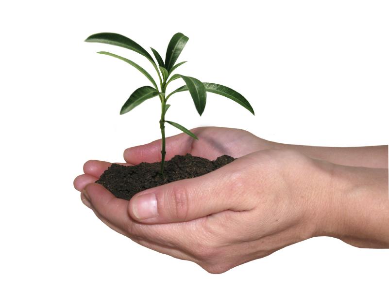 love plants essay